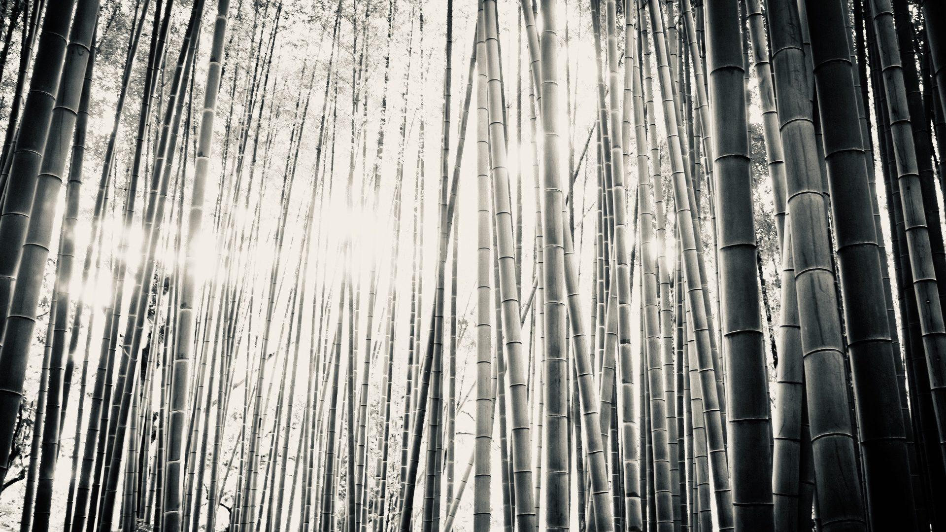 Bamboebeertje