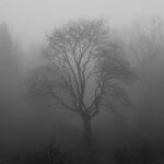 Een foto van kale bomen in een grijs en nevelig landschap die de najaarsdip illustreren