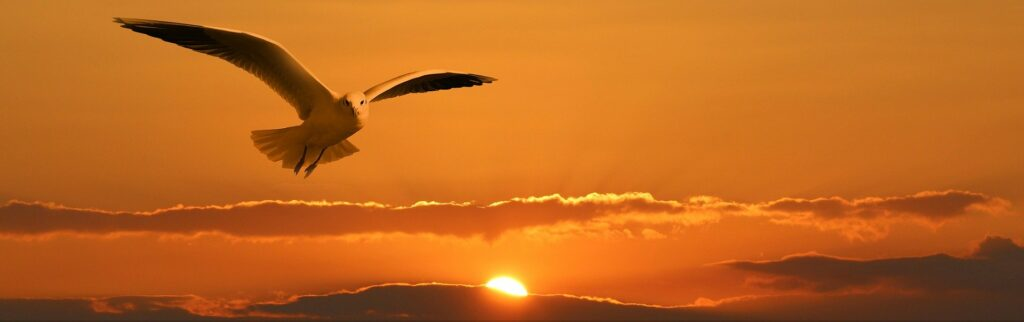Deze afbeelding van een vliegende meeuw bij zonsondergang illustreert het begrip vrijheid, de eerste waarde in het drieluik over vrijheid, gelijkheid en broederschap
